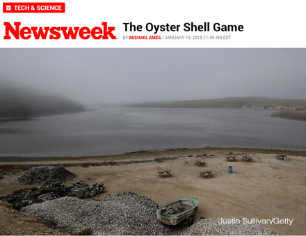The Oyster Shell Game article